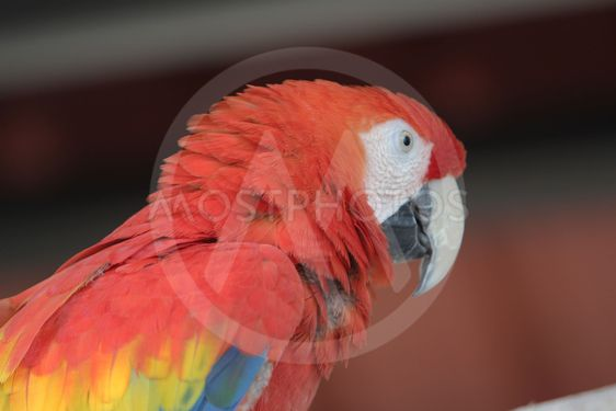 gold macaw of Hong Kong Ocean Park
