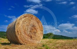 Beautiful summer landscape. Agricultural field. Round...