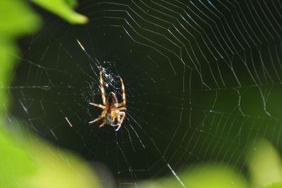 Successful spider