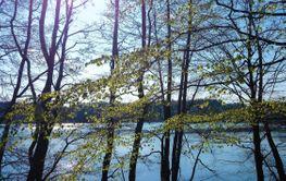 Almanacka 2020 April - Kalvsjön lövsprickning - Silvertid