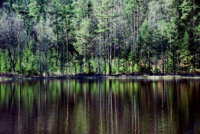 Trees at lake