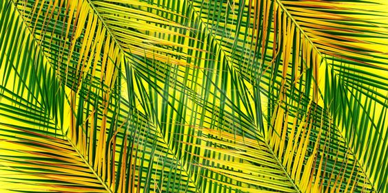 Tropical Palm Leaves Yellow By Olga Pink Mostphotos Exotic yellow and gold iguanas relaxing on timber. tropical palm leaves yellow by olga