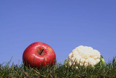 Apple and mini cauliflower  in grass against  a bright...