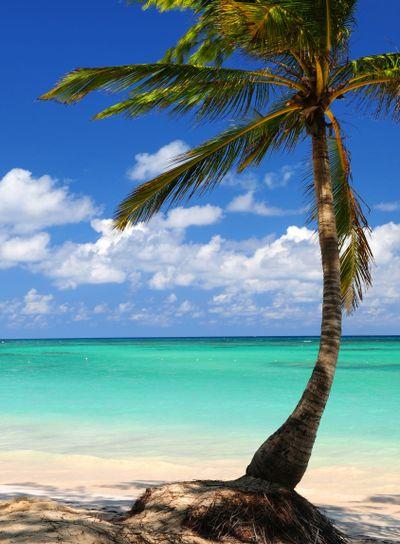 Beach of a tropical island