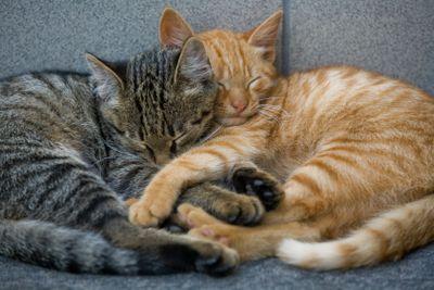 cats friends