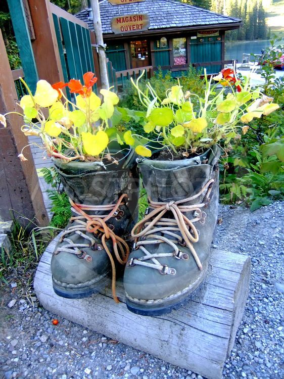 Novelty flower planter made of hiking boots, Emerald...