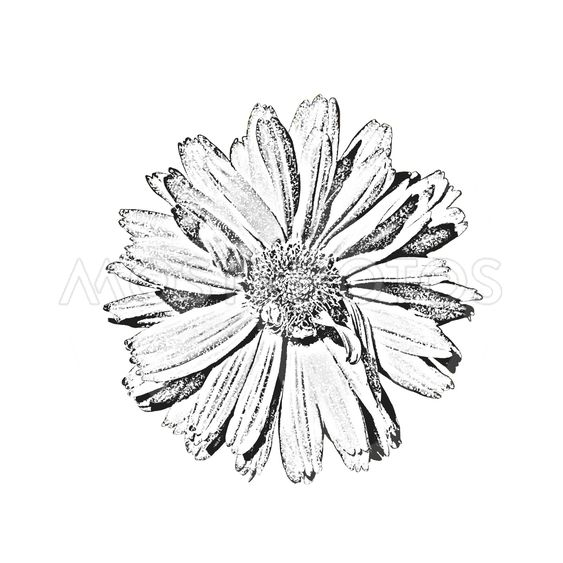 Creative digital flower.Digital artwork for creative...