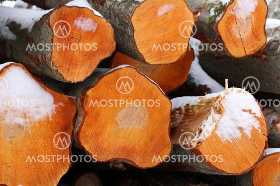 Freshly Cut Aspen Logs