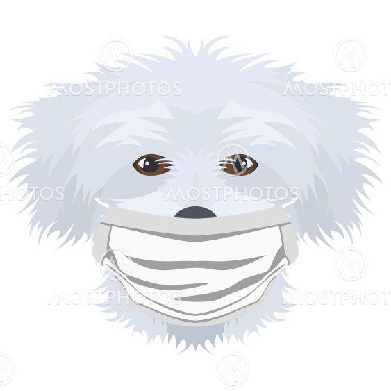 Illustration Dog Maltese with respirator