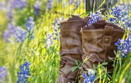 Cowboy boots in Texas bluebonnets