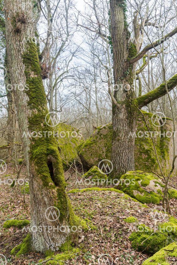 Stenar och block i en mossig skog på Öland