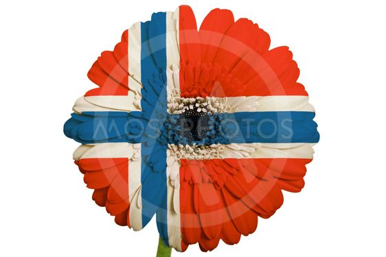 Gerbera daisy flower in col by vepar5 mostphotos gerbera daisy flower in colors national flag of norway on white background mightylinksfo