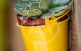 succulent plant in a yellow pot suspended on...