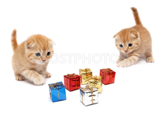 The kittens plays with gifts