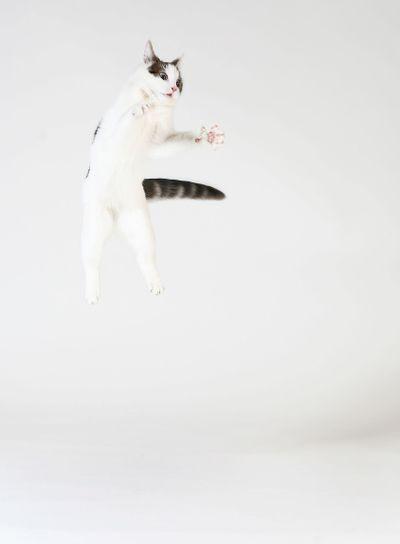 Cat In Flight