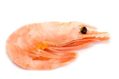 shrimp on white