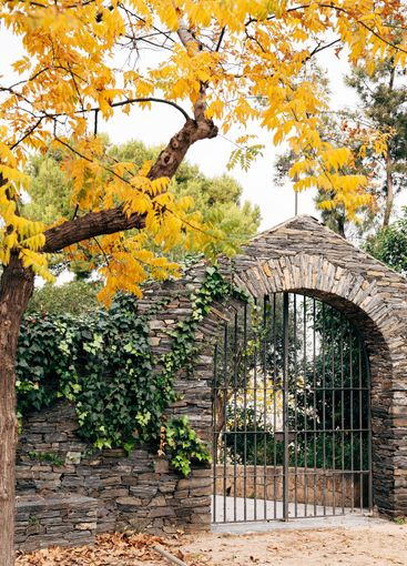 Metal gates in a stone fence under a yellow autumn tree