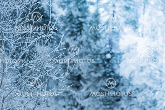 Snow trees on hillside. Fairy forest with frost on...