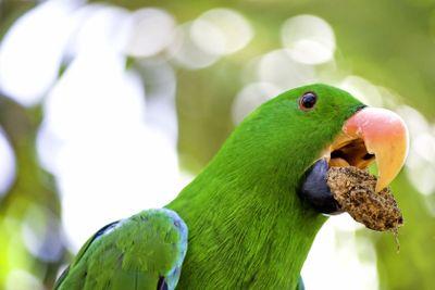 Green macaw portrait