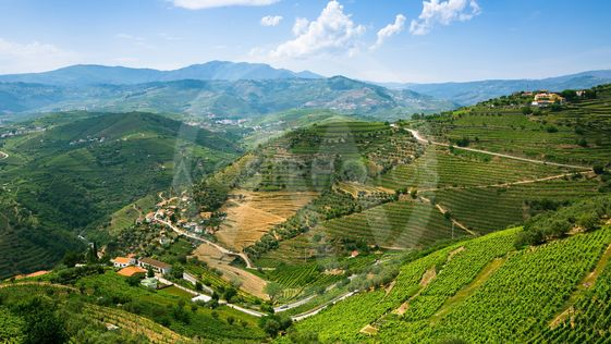 Top view of Douro Valley, the vineyards are on a hills,...