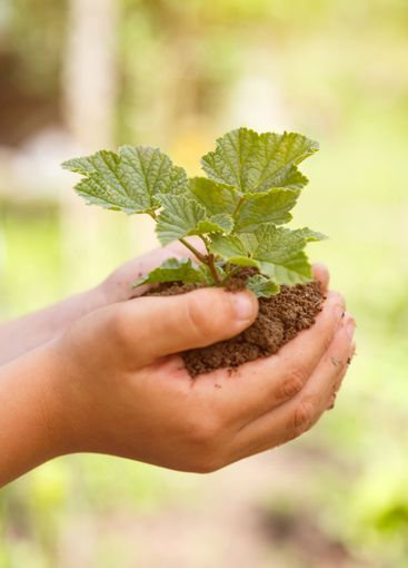 Child hands holding plant new life concept nature living...