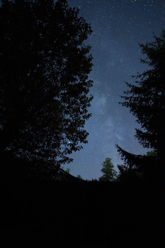 Forma láctea vista a través de los árboles del bosque
