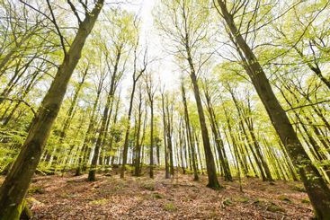 Low angle view of sunlit trees in forest, Sweden, Europe