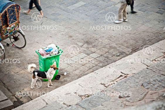Garbage dog