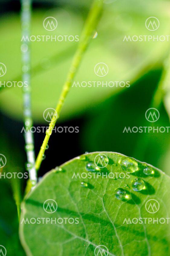 morning dew on leaf