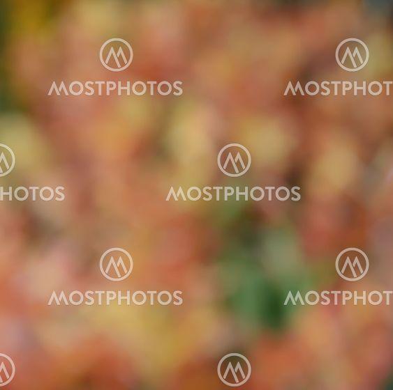Defocused orange flowers for abstract background