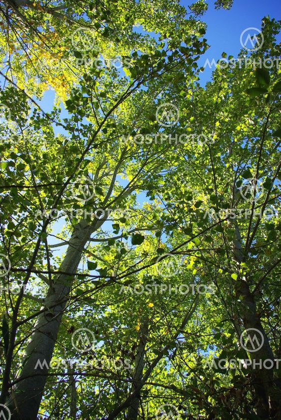 Green leaves of trees.