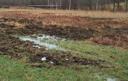 Vildsvinens framfart 1. (Wild boars work, Sweden)
