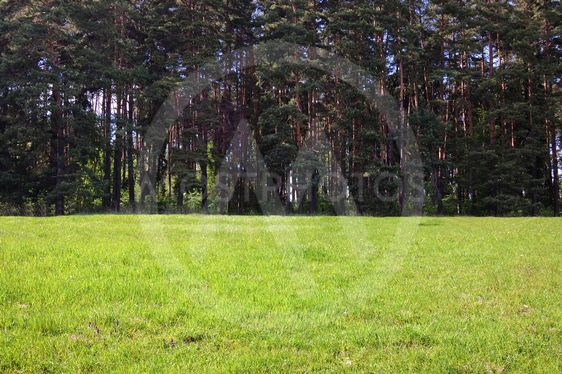 Forest with grass field