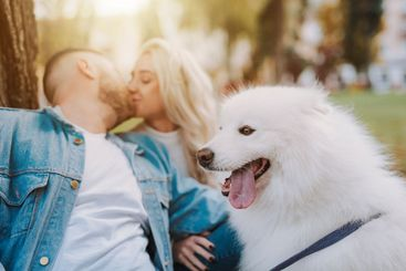 Happy couple with samoyed breed dog are kissing outdoors