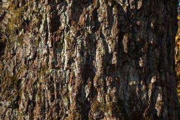 Tree bark texture, brown texture. Nature.