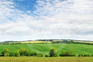 field with green plants and cloudy sky