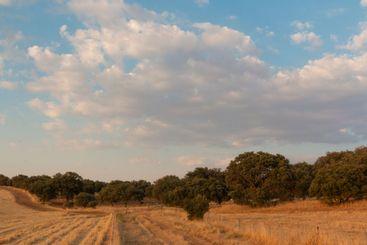 Campos de cereal en andalucia, en la hora dorada