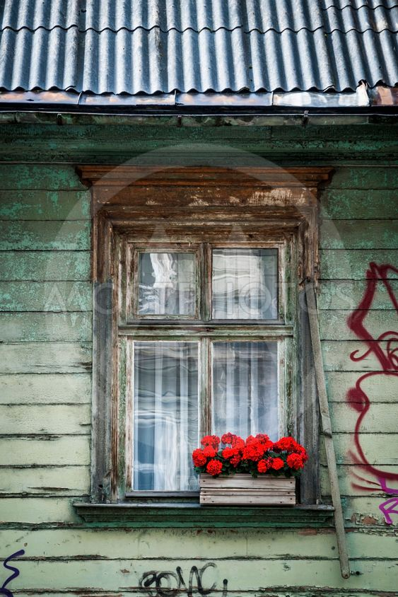 Close-up of window decorated with red flowers