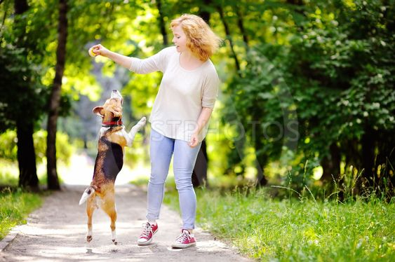 Young beautiful woman playing with Beagle dog