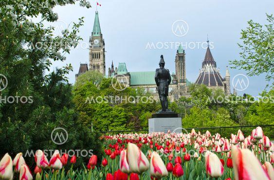 Tulips Canada