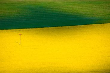 Green and yellow field