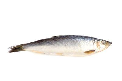 herring on white closeup