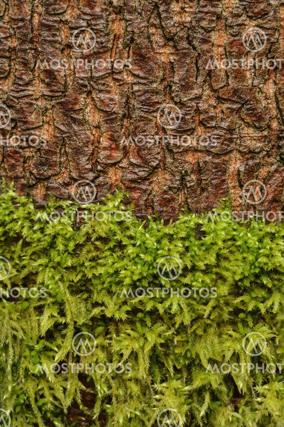moss and tree bark texture