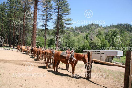 Stabil heste