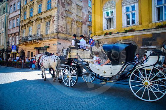 Krakow horse transport 13