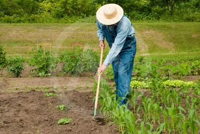 man working in his garden
