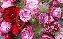 Flowers at Floraart in Zagreb,Croatia