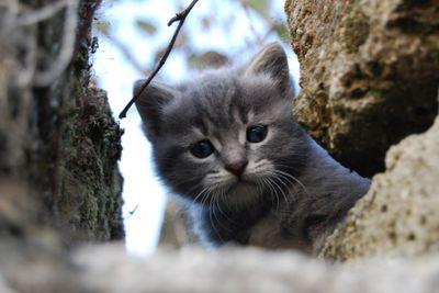 Small grey cat 5