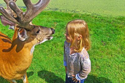 girl and deer