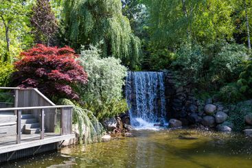 Waterfall and pond with lush trees and bushes